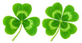Clover leaf isolated on white three and four symbol of saint patrick s day Stock Photo