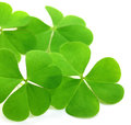Clover leaves Royalty Free Stock Photo