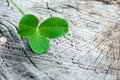 Clover on the old wooden background in nature Royalty Free Stock Photo