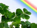 Clover and rainbow. Royalty Free Stock Photography