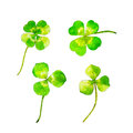 Clover set for Saint Patricks day, watercolor illustration in hand-drawn style.