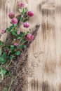 Clover on the wooden background and herbs Stock Images