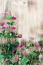 Clover on the wooden background and herbs Stock Image
