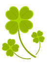 Clovers Stock Photos