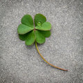 Clovers leaves on Stone background.The symbolic of Four Leaf Clover the first is for faith, the second is for hope, the third is Royalty Free Stock Photo