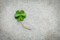 Clovers leaves on Stone Background.The symbolic of Four Leaf Clo Royalty Free Stock Photo