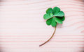 Clovers leaves on Stone .The symbolic of Four Leaf Clover the first is for faith, the second is for hope, the third is for Royalty Free Stock Photo