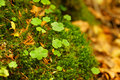 Clovers and moss group of between green Royalty Free Stock Images