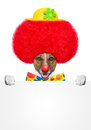 Clown dog with red wig and hat Stock Photo