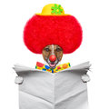 Clown dog with red wig and hat Stock Photography