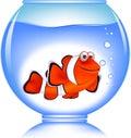 Clown fish in the aquarium Royalty Free Stock Images