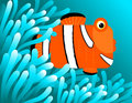 Clown fish hiding  Stock Photo