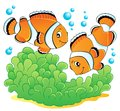 Clown fish theme image 1 Stock Images