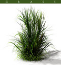 Clump of grass Royalty Free Stock Photo