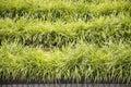 Clump of grass in garden growth Stock Photos