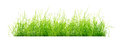 Clump of grass isolated Royalty Free Stock Photo