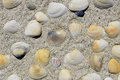 Cluster of colorful seashells in beach sand Royalty Free Stock Photo