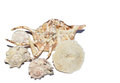 Cluster of seashells Royalty Free Stock Photo