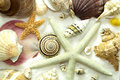 Cluster of Seashells Background Pattern Royalty Free Stock Photo