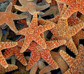 cluster of starfish Royalty Free Stock Photo