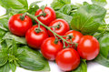 Cluster tomatoes on basil isolated white Stock Image