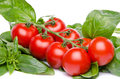 Cluster tomatoes on basil isolated white Royalty Free Stock Photography