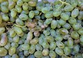 clusters of the fresh ripened grapes of green color are vitamin-rich, a breakfast, regetarianets,