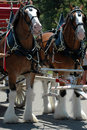 Clydesdale horses Royalty Free Stock Image