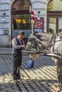 Coachman of traditional horse riding in vienna feeds the horses Royalty Free Stock Photo