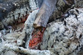 The coals of a campfire closeup. Royalty Free Stock Photo
