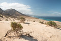 Coast of fuerteventura view on the the island spain Stock Photos