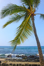 Coast kailua kona palm big island hawaii Stock Photo