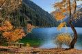 Coast of the mountain lake