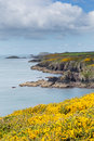 Coast path st non s pembrokeshire uk wales near from caerfai bay to bay in the national park towards ramsey island follows Royalty Free Stock Photos