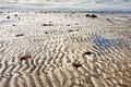 Coast of White Sea, Solovki, Russia Royalty Free Stock Photo