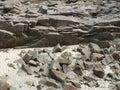 Coastal detail stony in brittany france Royalty Free Stock Photo