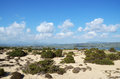 Coastal dune vegetation landscape with and blue sky with clouds Royalty Free Stock Photo