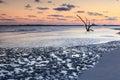 Coastal Mud Flats Folly Beach South Carolina Royalty Free Stock Photo