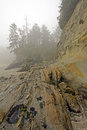 Coastal Rocks at Low Tide in the Morning Fog Royalty Free Stock Photo