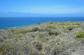 Coastal Sage Community in the Dana Point Headlands Conservation area.. Royalty Free Stock Photo