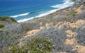 Coastal Sage Community in the Dana Point Headlands Conservation area. Royalty Free Stock Photo