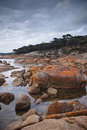 Coastal scenery, Coles Bay, Tasmania Royalty Free Stock Image