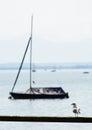 Coastal Seagull With Boat