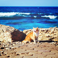 Coastline with ginger tabby roar cat travel at sea concept instagram retro effect Royalty Free Stock Image