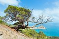 Coastline of novyj svit summer view crimea ukraine reserve with pine tree in front and capchik cape behind Stock Photos