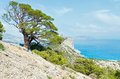 Coastline of novyj svit summer view crimea ukraine reserve with pine tree in front and capchik cape behind Stock Photography