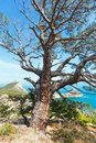 Coastline of novyj svit summer view crimea ukraine reserve with pine tree in front and capchik cape behind Stock Image