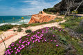 Coastline at ohos de aqua southern portugal near albufeira algarve in spring with hottentot fig carpobrotus edulis flowers in Stock Photos