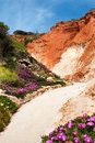 Coastline at ohos de aqua southern portugal near albufeira algarve in spring with hottentot fig carpobrotus edulis flowers in Royalty Free Stock Photo