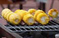 Cob grilling corn on the on a grill Stock Images
